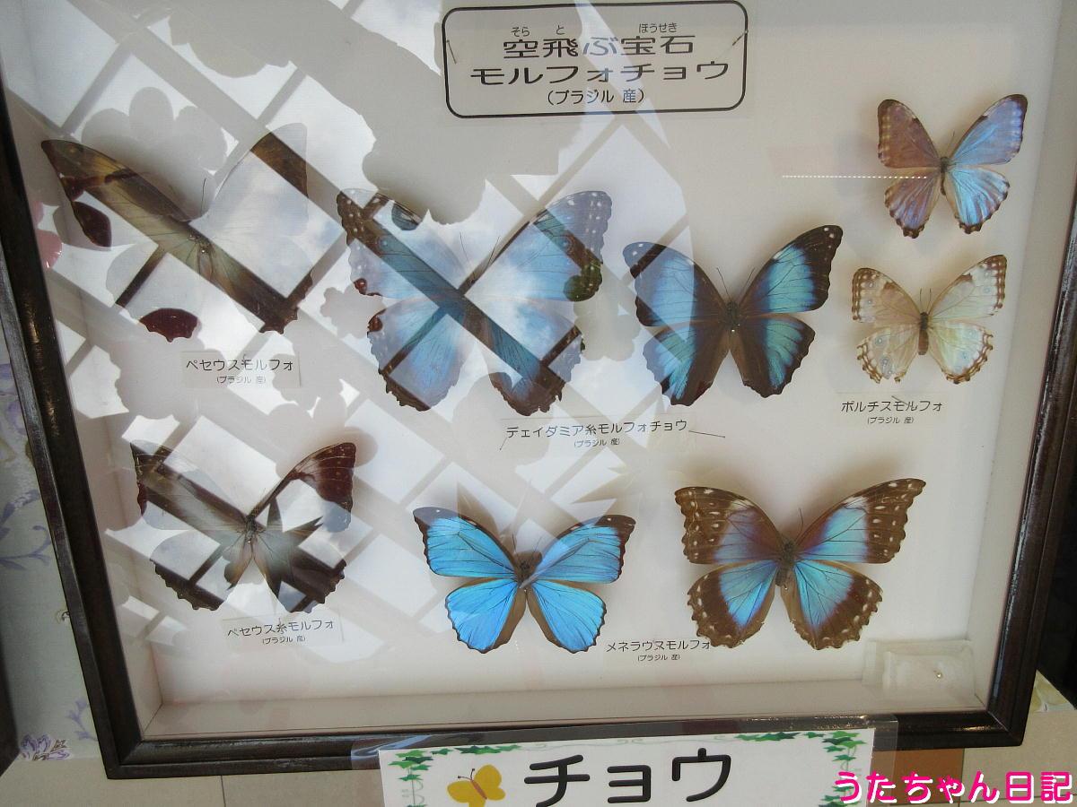 f:id:utachan0831:20210914225944j:plain