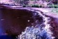 [桜]カモメ川~
