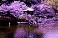 [桜]は~るの~うらぁらぁの~