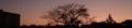 武蔵野中央公園 黄昏