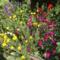通勤路の花壇