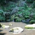 六義園の湧水