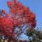 桐生の紅葉