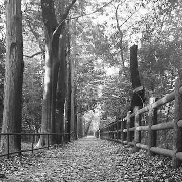 落ち葉の散歩道 マイケル・ケンナ風