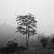 御殿場、一本の木 マイケル・ケンナ風