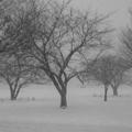 雪の武蔵野中央公園 マイケル・ケンナ風