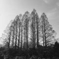 武蔵関公園 マイケル・ケンナ風