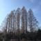 武蔵関公園