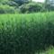 Field of Dreams, 神代植物園、水生植物園