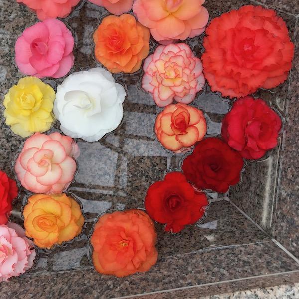 水槽のバラ