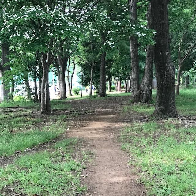 武蔵野中央公園 小径