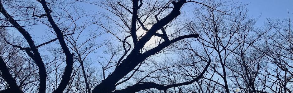 逆光の枯れ木