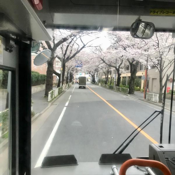 バスの車窓から見る桜並木