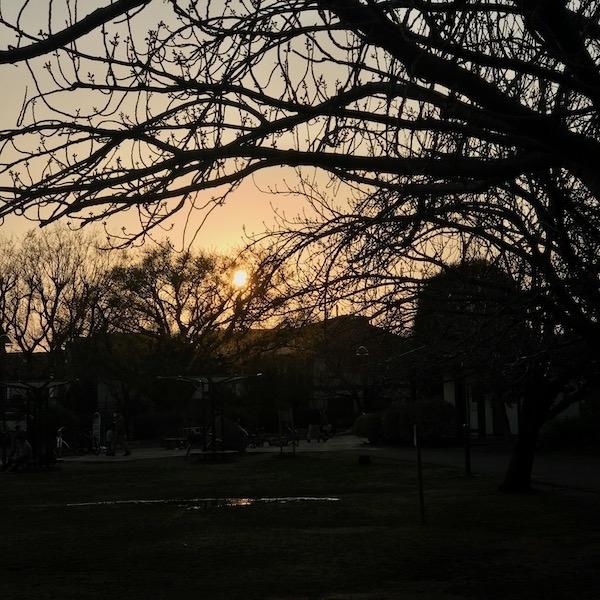 黄昏の公園