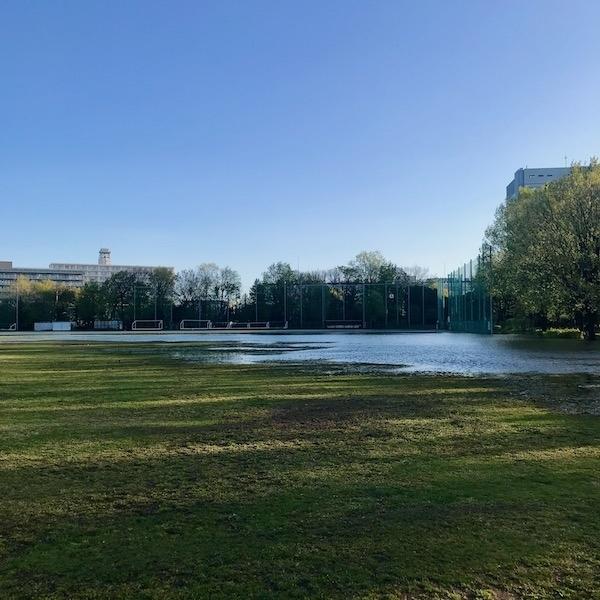 公園のたまり水