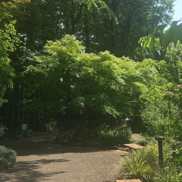 木の花小路公園の緑