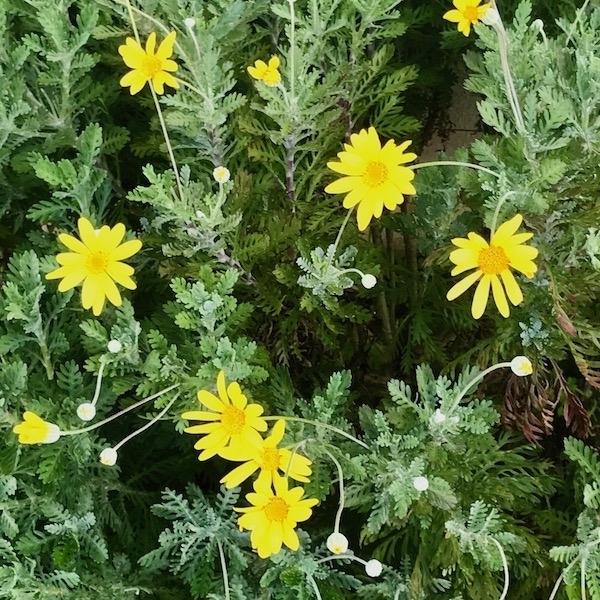 道端の野花