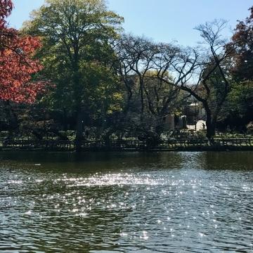 井の頭公園の池の水面