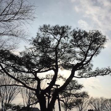 公園の樹、逆光