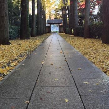 参道のような公園の入口