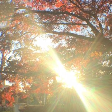 紅葉と陽光