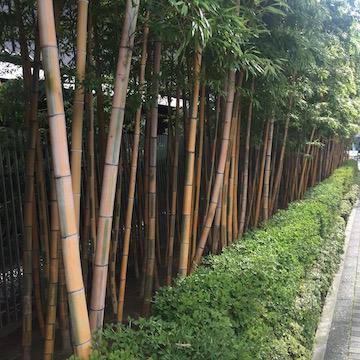 根津美術館の竹垣