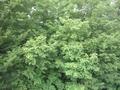 桶川市倉田N様 東京タワー受信方向は林、目の前。