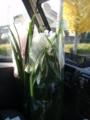 今日は花屋さん、シンビジウム・シクラメンを届けます。