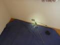 UB上の部屋の状況です。上へ、下へ、釣り名人。