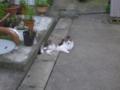 夕涼みの猫。