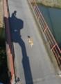 橋を渡る猫。