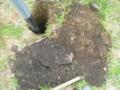 穴掘ったらガラばっかり。
