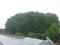 この雑木林で、BSが受信できなくなっていました。