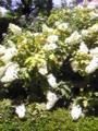 f:id:utuwa:20110625121400j:image:medium:right