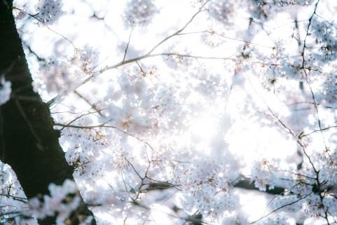 f:id:uzumaki_beet:20170409101601j:plain