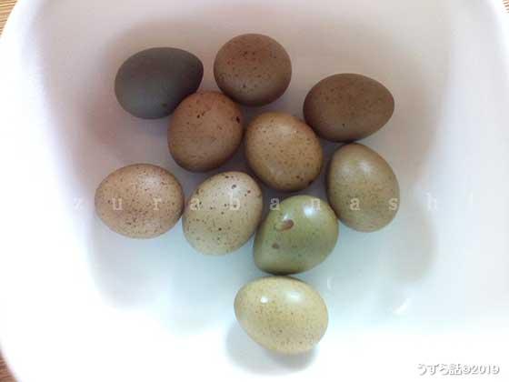 いろんな色のヒメウズラの卵