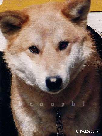 かわいい雑種犬