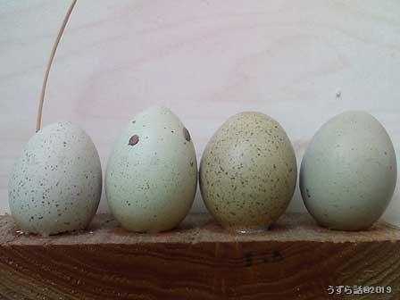 ヒメウズラの卵のグラデーション