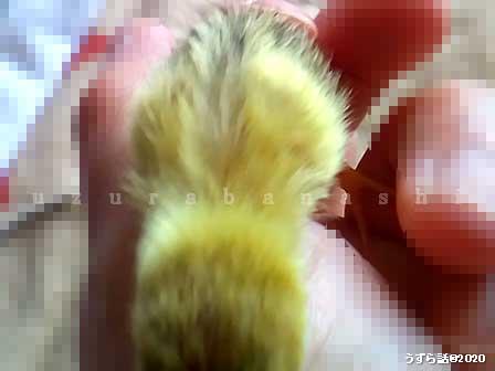 f:id:uzurabanashi:20200101145044j:plain