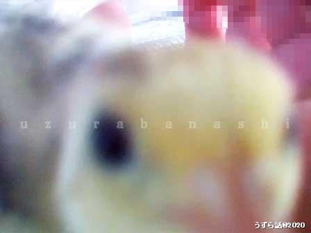 f:id:uzurabanashi:20200101145246j:plain