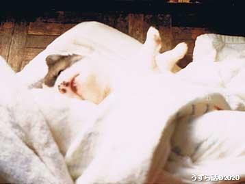 毛布にくるまって遊ぶ子犬