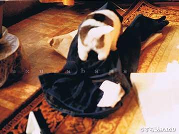 洗濯物で遊ぶ子犬