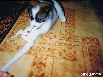 包帯で遊ぶ子犬