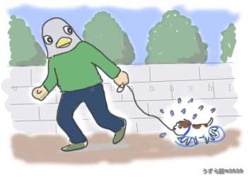 子犬の初散歩
