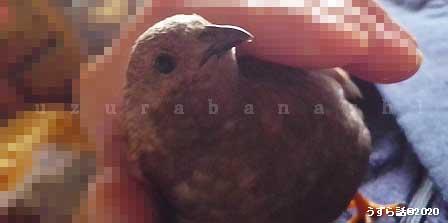 f:id:uzurabanashi:20201213201929j:plain