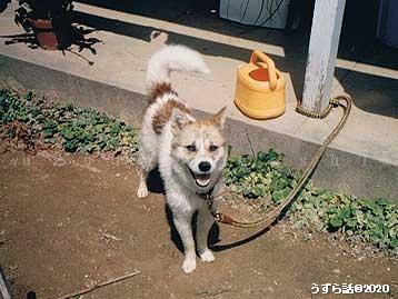 洗われて乾かし中の犬
