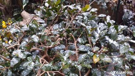 二月中旬の雪