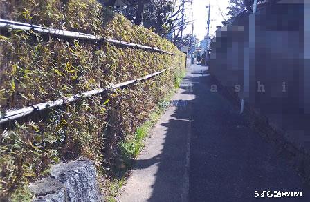 竹の生け垣