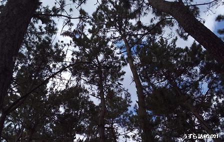 木の枝にカラスがいる