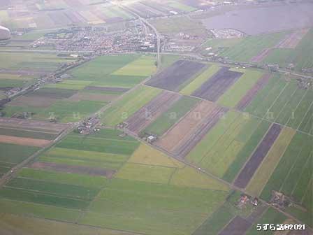 オランダの畑